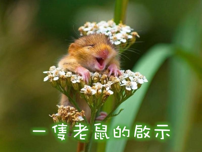一隻老鼠的啟示