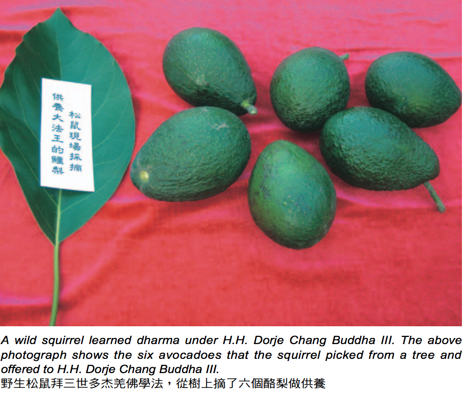 頂聖如來的聖量 松鼠獻酪梨給三世多杰羌佛